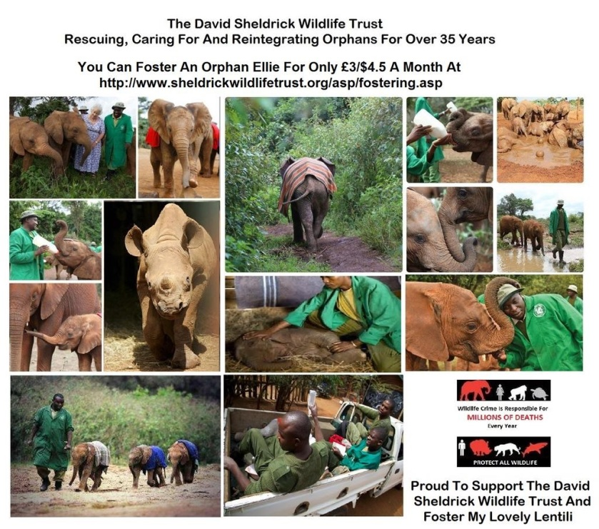 - 0 a DSWT PROUD TO SUPPORT