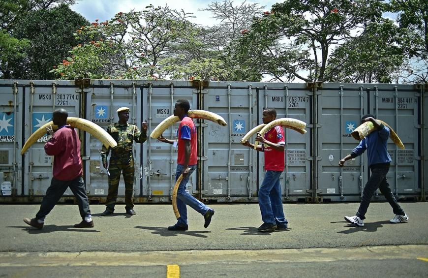 kenya-ivory