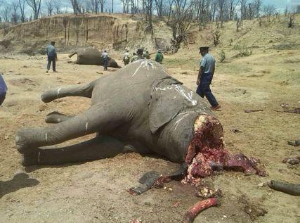 elephant-377829