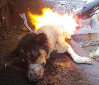 yulin1