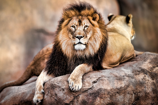 dish-072915-cecil-the-lion_1.jpg