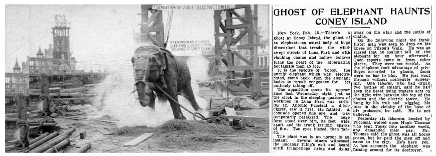 Elephant-Edison