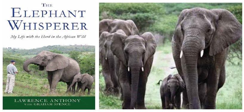 ELEPHANT-WHISPERER-US