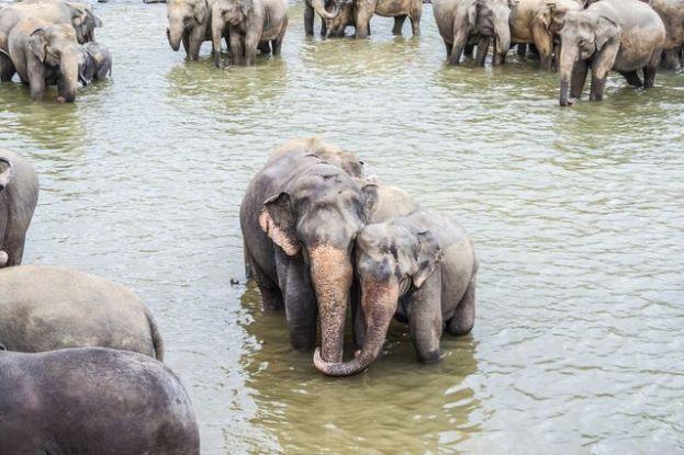 elephants-PTSD.jpg.638x0_q80_crop-smart