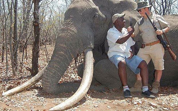 nkombo-elephant_3473812b