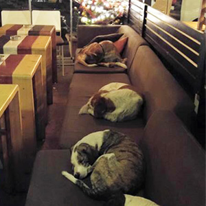 stray-dogs-sleep-cafe-hot-spot-lesbos-greece-thumb