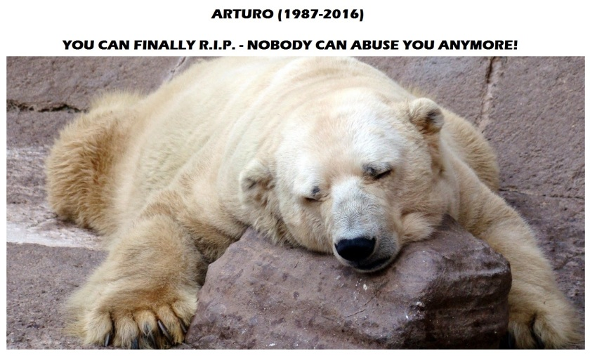 arturo_polar_bear_depression
