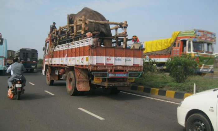 Sunder-on-Truck-to-Sanctuary