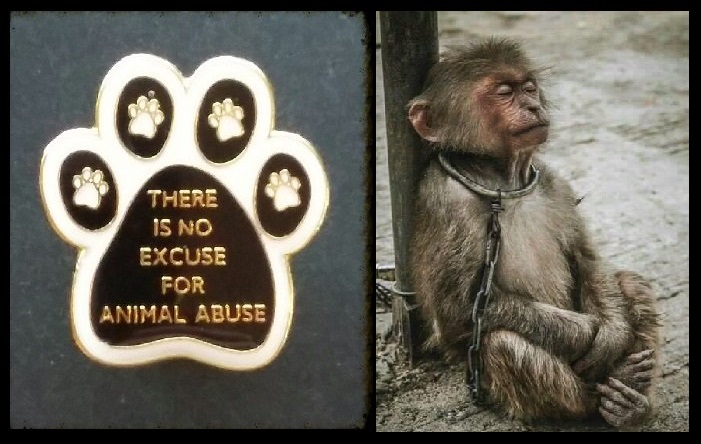 - - THERE IS NO EXCUSE FOR ANIMAL ABUSE