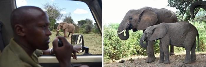 3939-elephantsamburu