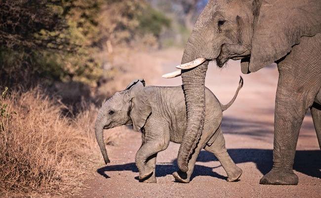 dswt-3188984-large