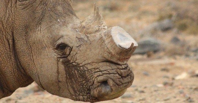 rhino-jpg11