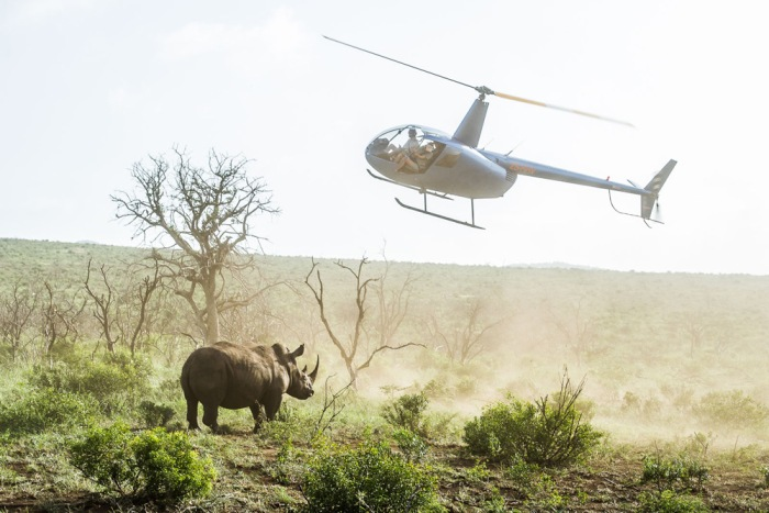 2-a-helicopter-hovers-close-to-a-white-rhino-that-has-just-been-darted-from-the-air-by-a-qualified-veterinarian