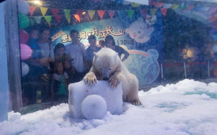 113640337-worlds-saddest-polar-bear-pizza-2-laru