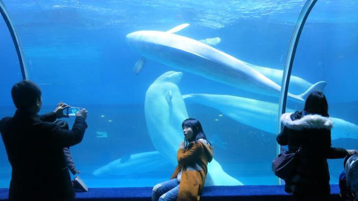 hc-wapo-china-ocean-parks-20160209-001