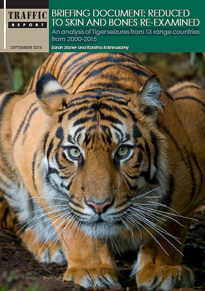 tiger_report_cover