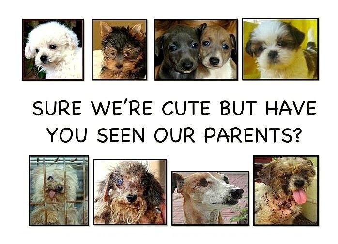 Dogs Trust Blue Cross Battersea Please Dont Let Puppies Keep