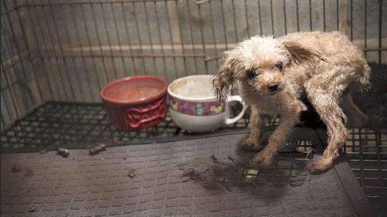 puppy-mills-1bdec8df-ccbe-4191-81c0-83d3013d7209