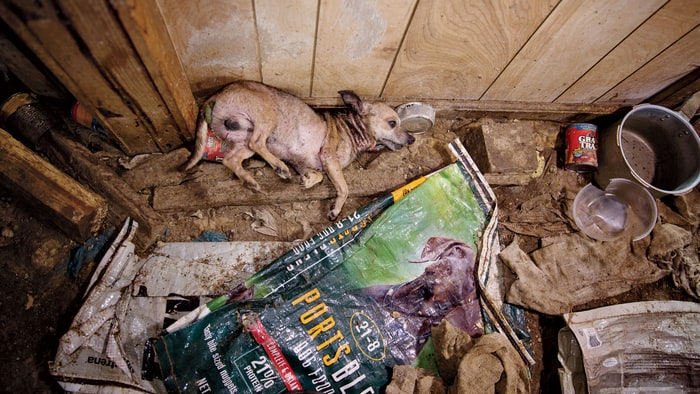 puppy hell the horrors of puppy mills protect all wildlife