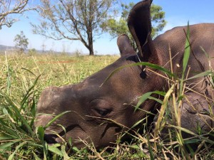 rhino-attack-thulathula-5-300x225