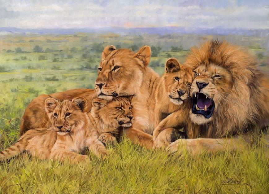 lion-family-david-stribbling