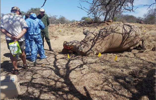 Rhino-killed