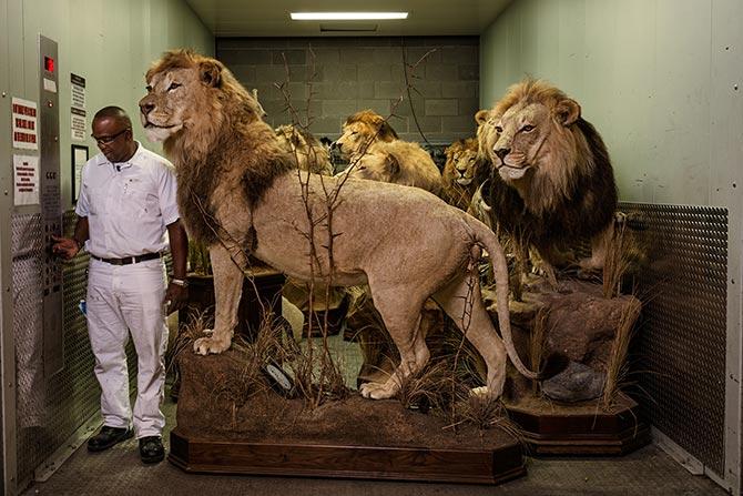 11-lions-elevator-670