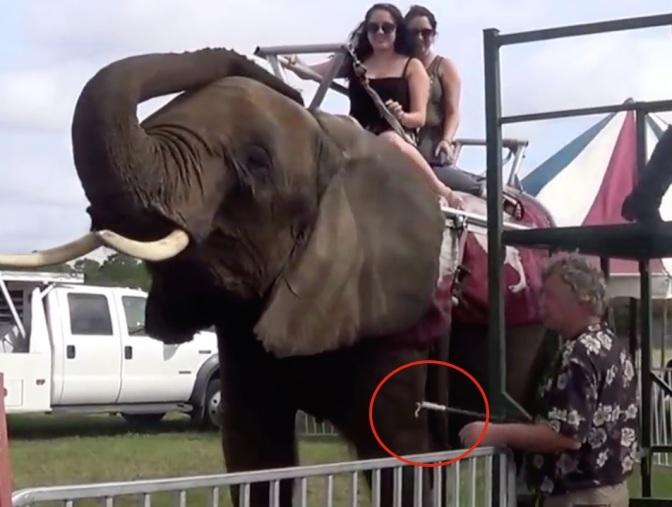 Nosey-elephant-eye-infection