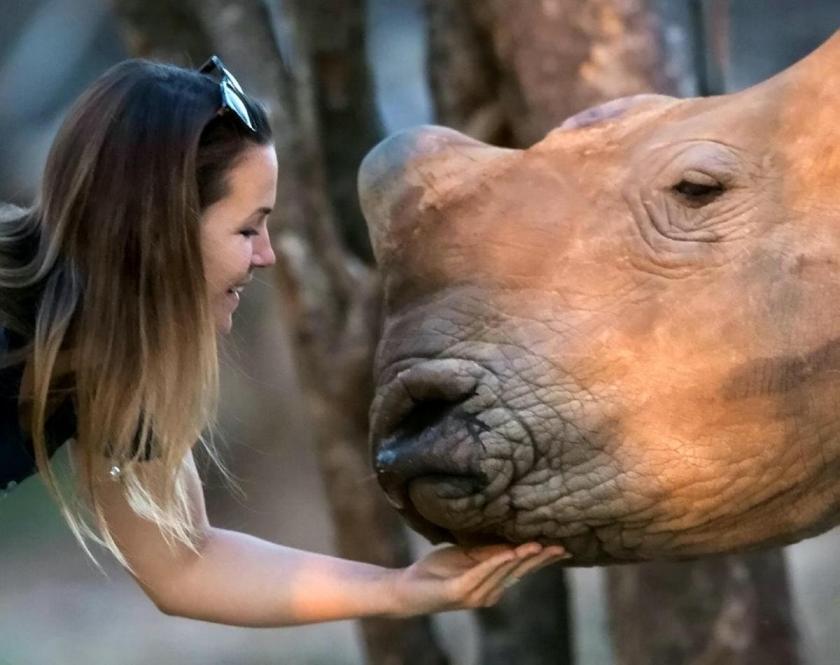 rhino-release-f-71246.jpg.gallery