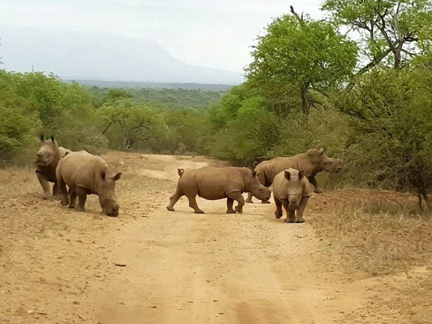 rhino-release-f-71248