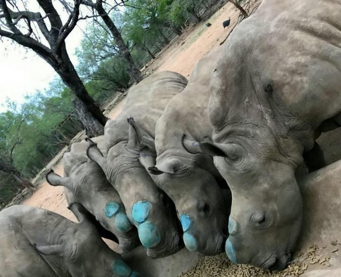 rhino-release-f-71249.jpg.gallery