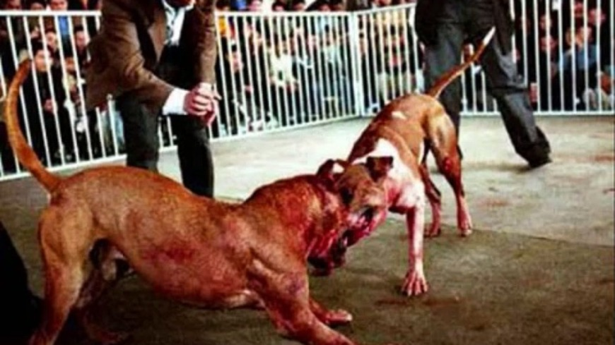 Dog Fight In Dog Park Injuries