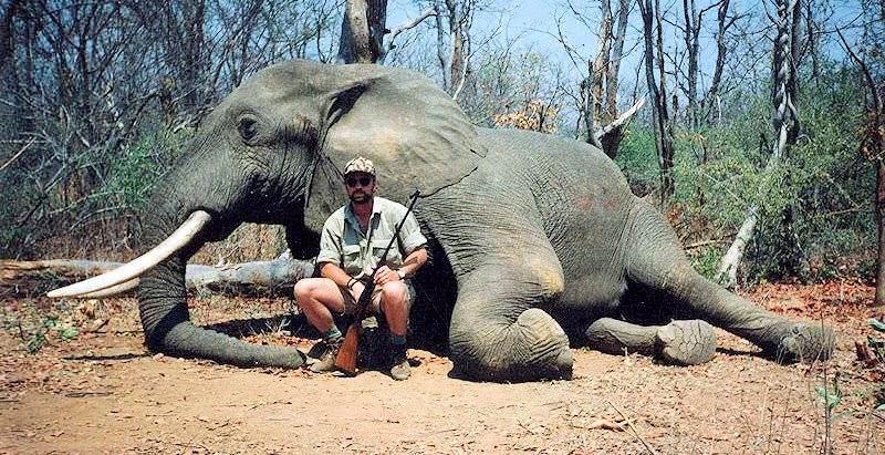 bg_bg_elephant
