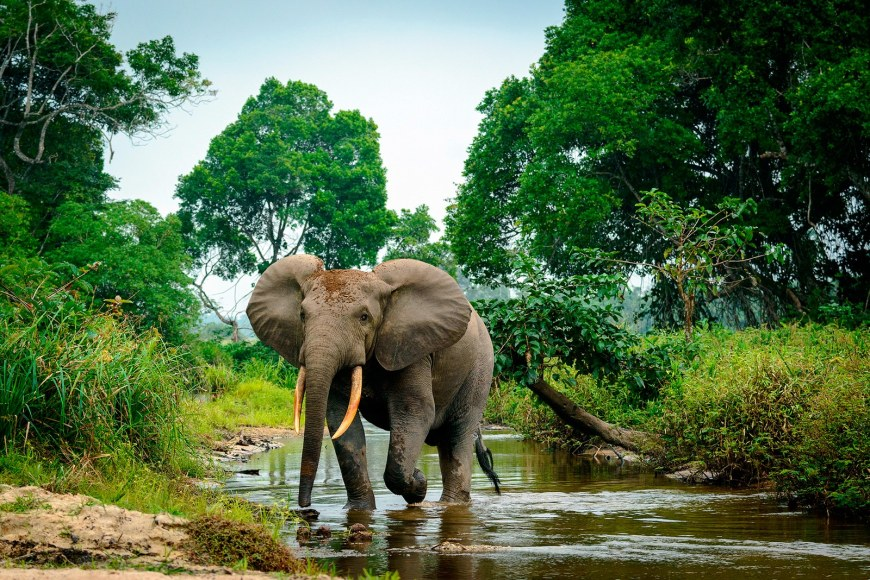 garamba-democratic-republic-of-congo-elephant-poaching-0