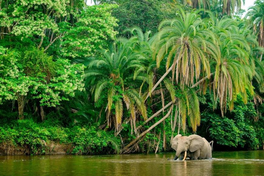 garamba-democratic-republic-of-congo-elephant-poaching-9