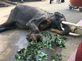 kerala-dead-elephant