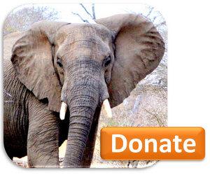 Donate-BUTTON-elephant-300x